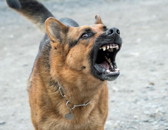 Szczekanie psa. Dlaczego szczekają i jak je tego oduczyć? - blog ...